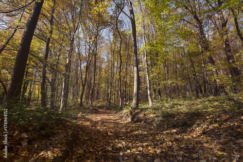 Fridge magnet Picture of forest path covered with leaves