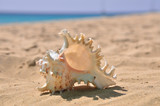 shell on the sand - 176966581
