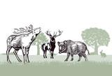 Hirsche und Wildschwein im Forst - 176968392