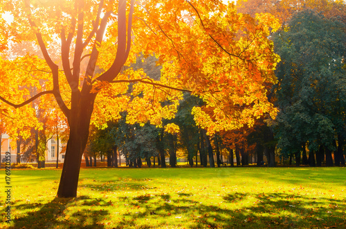 Aluminium Oranje Autumn colorful landscape in sunny autumn landscape park lit by sunlight. Autumn park in bright sunlight
