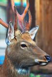 Head of  deer - 176974119