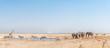 Quadro Elephant, giraffe, Burchells zebras, springbok, blue wildebeest at a waterhole