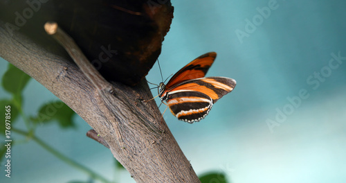 Fotobehang Vlinder Picture of beautiful colorful butterfly on tree