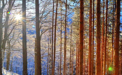 Fotobehang Bruin Beautiful landscape with sun rays in winter forest