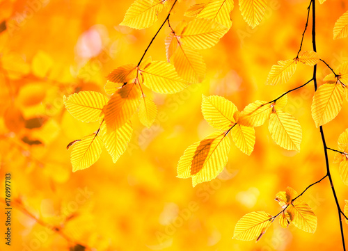 Poster Oranje leaves in autumn forest