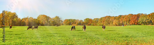 Kühe auf der Weide im Herbst - 176998729