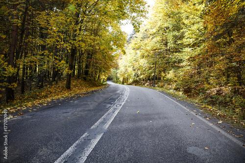 Papiers peints Automne autumn road