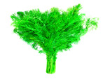 green bunch of dill - 177015902