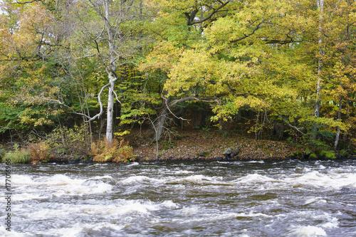 Papiers peints Rivière de la forêt River autumn day