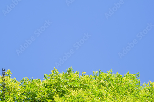 Bright green leaves against blue sky at the bottom of the frame, copy space usin Poster