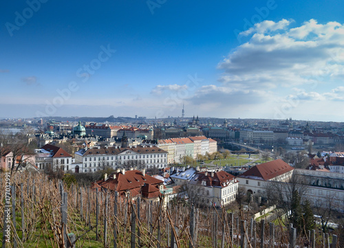 Vineyard in Prague near Hradcany hill and city view in Czech Republic  © Mateusz