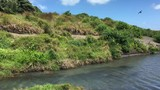 Landscape view of Karekare stream in the West Coast of the North Island near Auckland, New Zealand. - 177034143