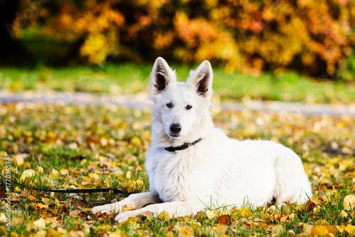 dog on an autumn walk