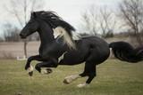 Friesian Horse - 177063554