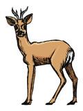 roe deer, forest animal - 177074565