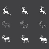 Reindeer - 177074983