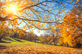Fototapety Sunny autumn landscape with golden trees and blue sky in countryside