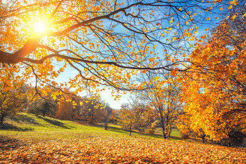 Sunny autumn landscape with golden trees and blue sky in countryside
