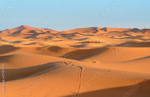 Staande foto Marokko Caravan of Camels in Erg Chebbi Sand dunes near Merzouga, Morocco