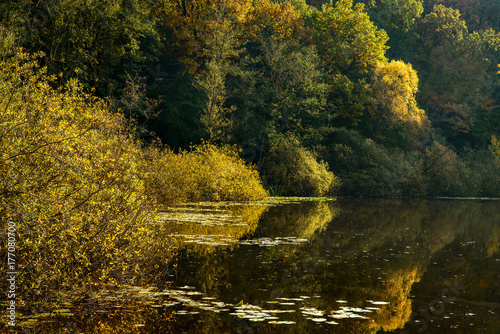 Herbstliches Farbenspiel am Teufelssee in Berlin-Köpenick Poster