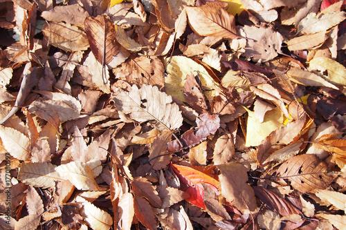 Papiers peints Orange eclat 一面の落ち葉