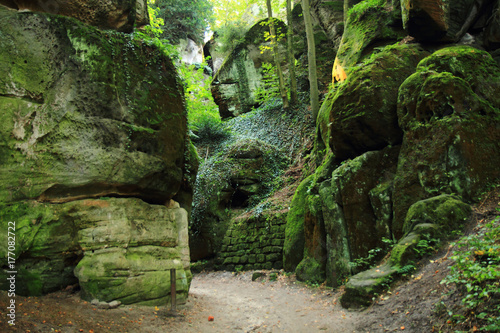 Fotobehang Betoverde Bos rocks in the green forest