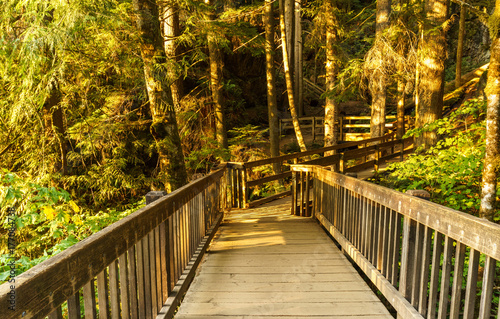 Wall mural Wood bridge on the forest part of a hiking trail.