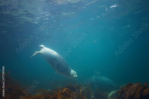 Fotobehang Groen blauw underwater landscape