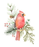 Watercolor vector Christmas bouquet with Bird Cardinal and fir branches. - 177093939