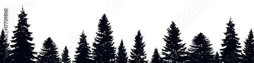 Fir trees - 177098161