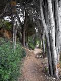 Walk in the Woods - 177107768