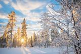 Snowy landscape at sunset, frozen trees in winter in Saariselka, Lapland, Finland - 177109119