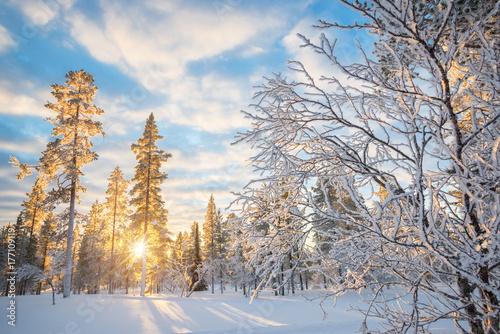 Fridge magnet Snowy landscape at sunset, frozen trees in winter in Saariselka, Lapland, Finland
