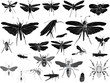 black and gray insects on white