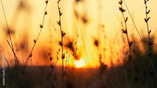 Foto op Plexiglas Bruin Sunset grass in sunset field background