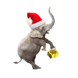 African elephant with santa's cap delivering christmas gifts. - 177160947