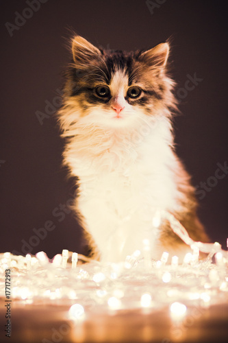 portrait of a small sleepy kitten in garlands lights