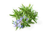 Blossoming rosemary plant branch isolated on white background - 177185380