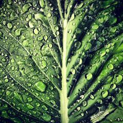 Rain on Plant Leaf