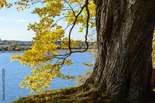 Papiers peints Gris traffic autumn colored trees in the park