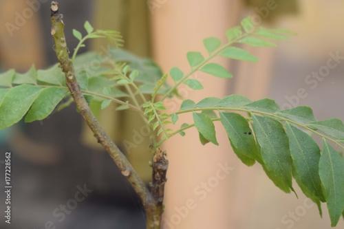 Fridge magnet Green Plant Leaves
