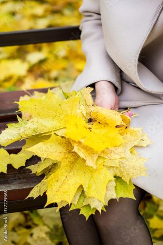 Кленовые листья в руках девушки осенью.