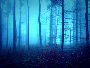 Dark creepy blue saturated foggy forest trees landscape. Color filter effect used. © robsonphoto