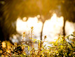 黄金に輝く植物