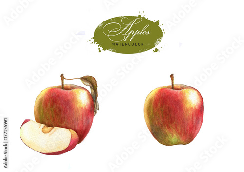 Tasty red watercolor apples. Hand drawn illustration of the isolated red apples on the white background. Autumn fruits harvest clip art for package design - 177255961
