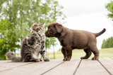 friendship cat and dog - 177264575