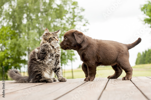 friendship cat and dog Poster