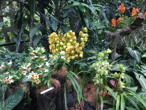 Dendrobium Frosty Dawn and other orchid flowers in a Singaporean garden Poster