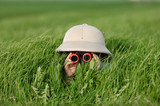 Fototapety Little Boy with Binoculars and safari Hat, laying in the grass searching for Knowledge