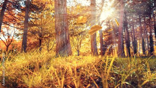 Papiers peints Orange eclat Wald im Herbst